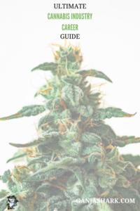 Cannabis Career Guide