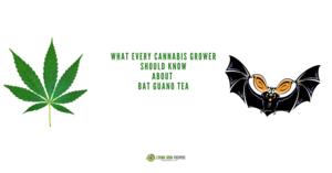 Bat Guano Tea Recipe