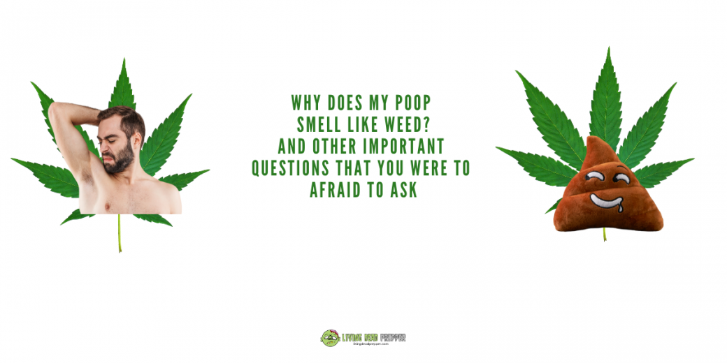 Why Does My Poop Smell Like Weed?