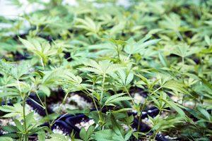 Ferti Lome Plant Food 9 58 8